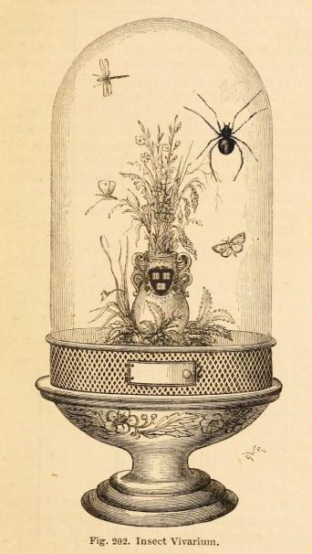 insectvivarium copy