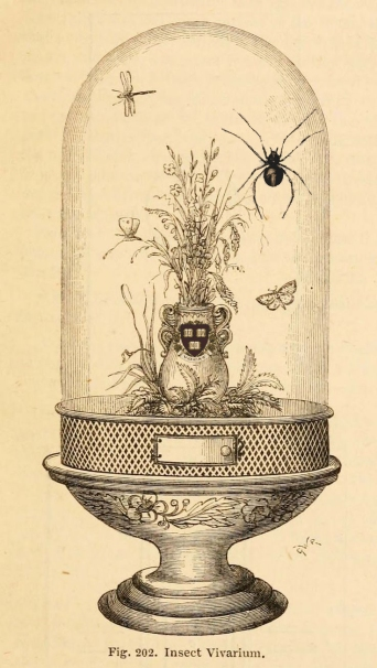 insectvivarium copy